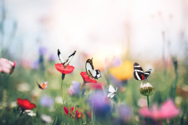 Summer meadow picture id1206854765?b=1&k=6&m=1206854765&s=612x612&w=0&h=5pnutfphzjlexe4lph4215ru2jxewo1iwiawx ovqcg=