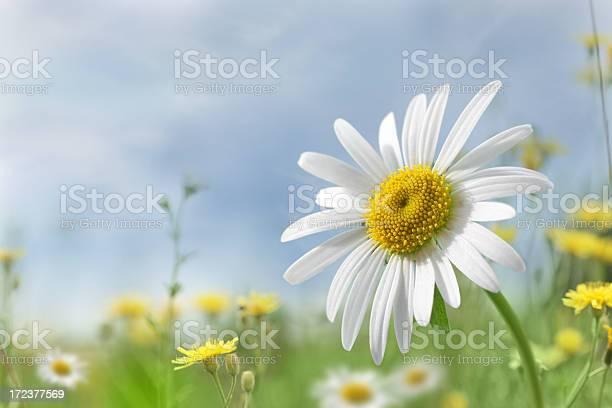 Summer meadow picture id172377569?b=1&k=6&m=172377569&s=612x612&h=pagqmt3s8acj9uocwlkkaz5txzay1dioomjfer7zb q=