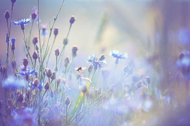 Summer meadow picture id174821911?b=1&k=6&m=174821911&s=612x612&w=0&h=vwnunnw3ol1vkt53xizhczsbbs2r7miq7lpqlmfcev8=