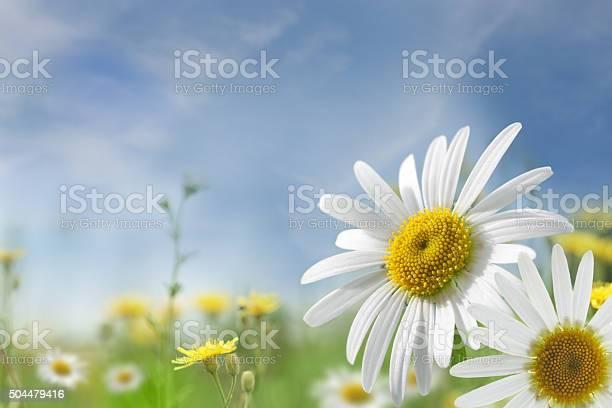 Summer meadow picture id504479416?b=1&k=6&m=504479416&s=612x612&h=eyst51xmmgofw9udvh16kcjab9pcoelzzu8khtwxiam=