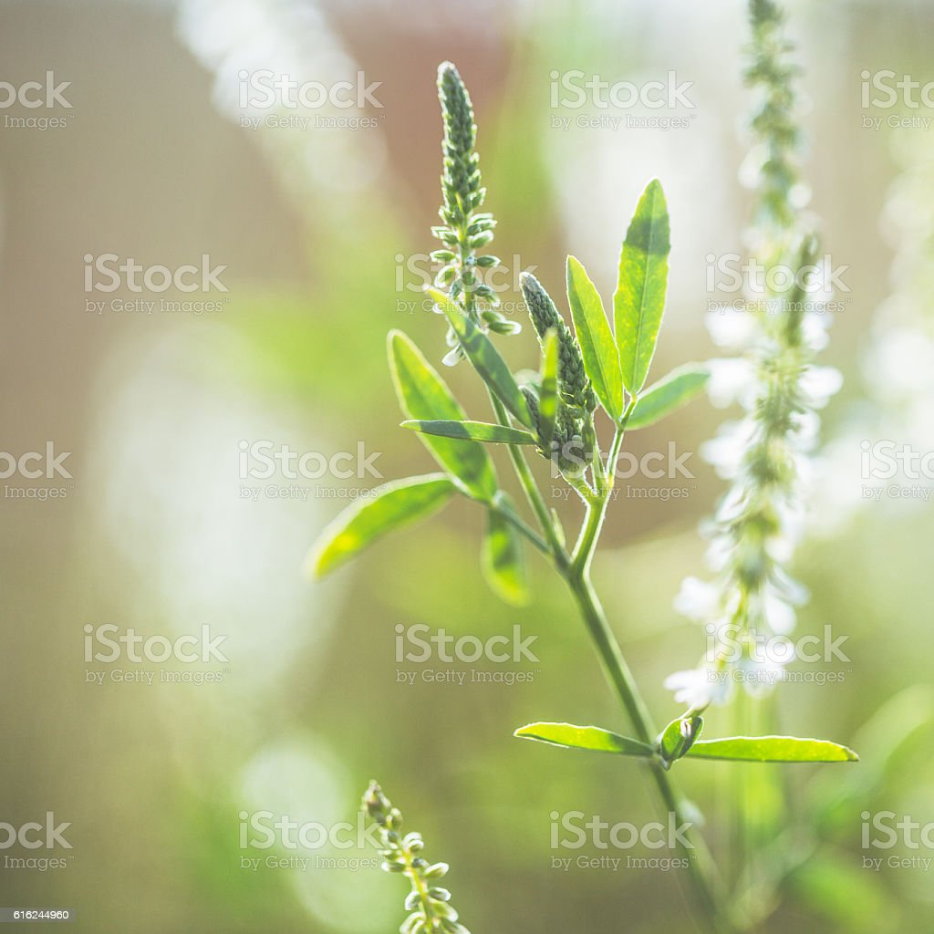 Summer meadow stock photo