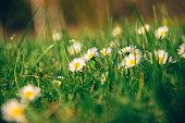 Meadow, Field, Summer, Sky, Springtime