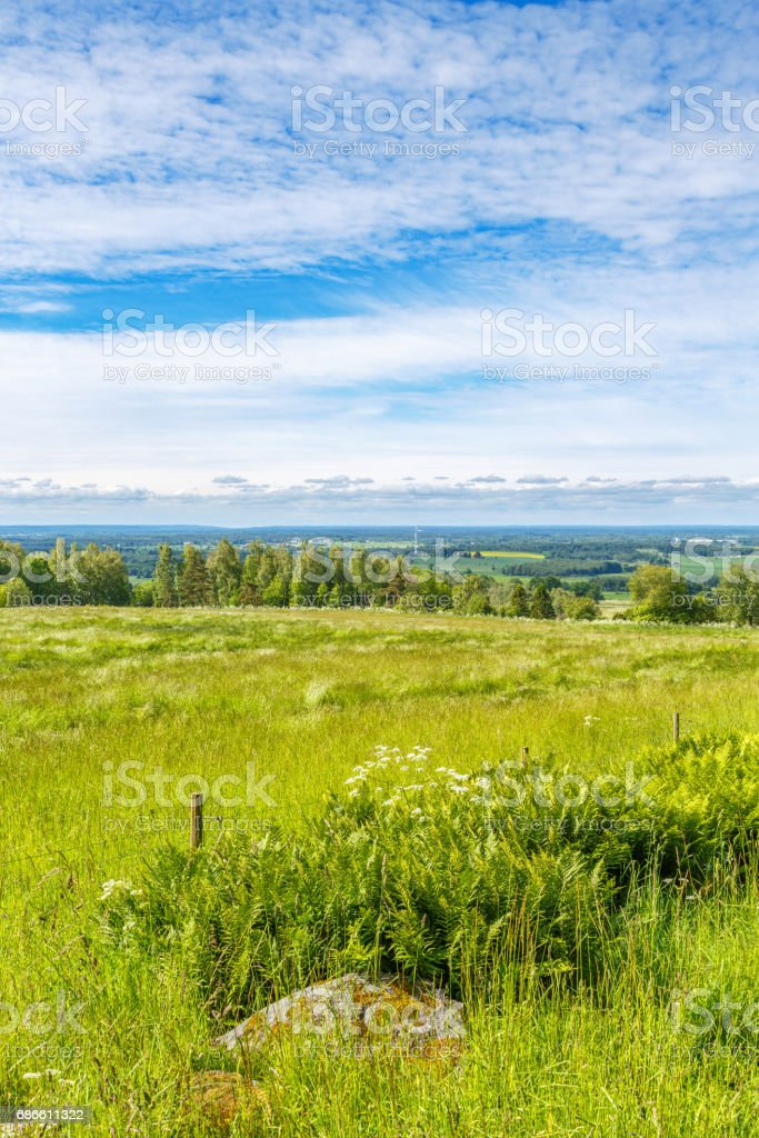 Summer meadow with a beautiful view of the countryside royalty-free stock photo