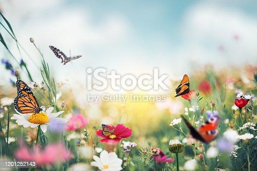 istock Summer Meadow With Butterflies 1201252143
