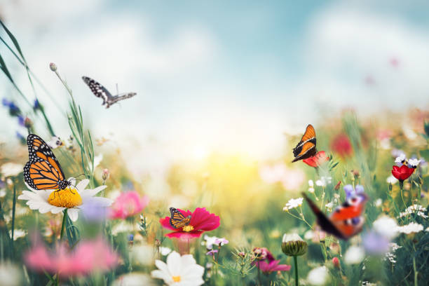 Summer Meadow With Butterflies Summer garden full of colorful flowers and butterflies flying around. spring stock pictures, royalty-free photos & images