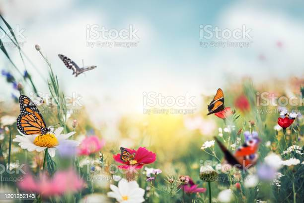 Photo of Summer Meadow With Butterflies