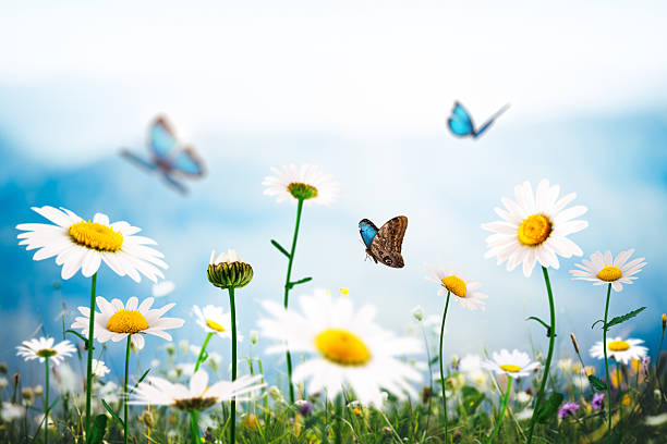 Summer meadow with butterflies picture id533625225?b=1&k=6&m=533625225&s=612x612&w=0&h=9tmqjm gcd72mw1bovpvsz64lhzrysqvc7 y2vgn64o=