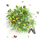 Summer meadow with flowers and various insects, isolated on white background. 3D rendering. 3D image.