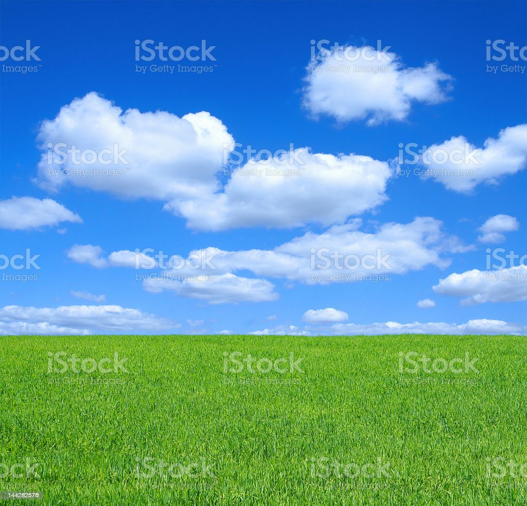 Summer meadow with fluffy clouds and sky stock photo