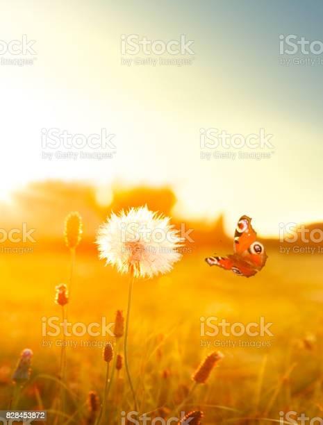 Summer meadow with flying butterfly picture id828453872?b=1&k=6&m=828453872&s=612x612&h=slpogjj7tgbiq3rvg lgo5fb5sburukukfozgbtnmhe=