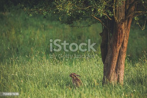 istock Summer meadow with rabbit under the tree 700697636