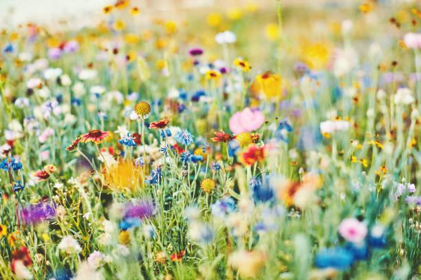 Sommerwiese mit lebendigen Wildblumen – Foto
