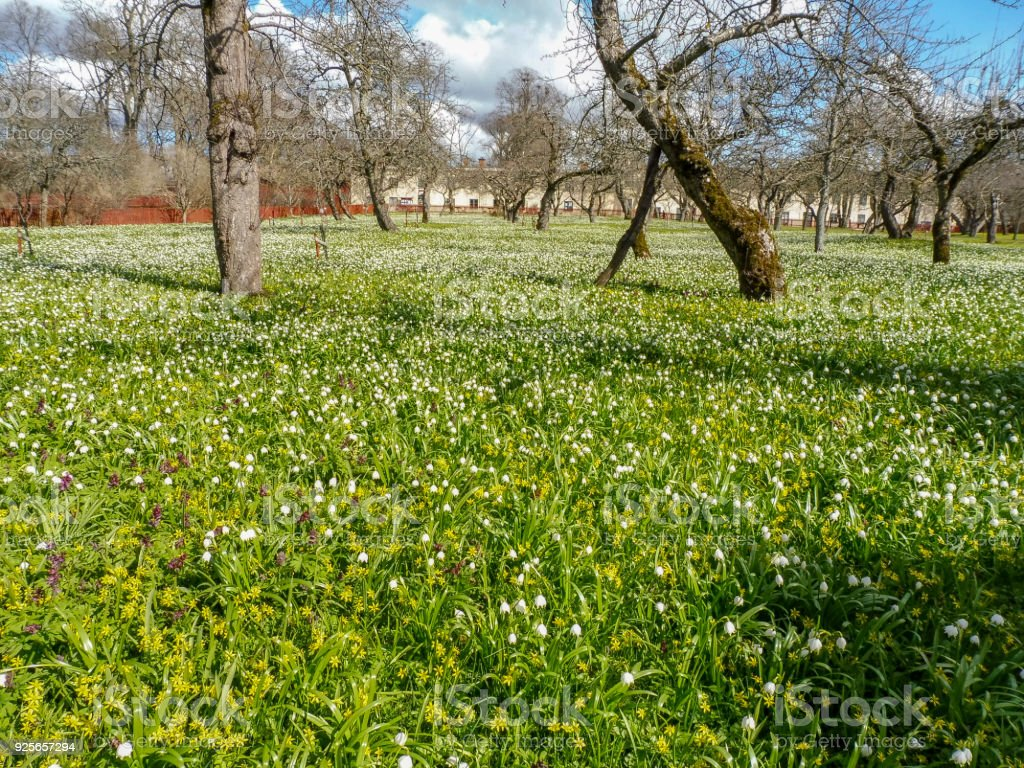 Summer Meadow With White Flowers And Green Grass With Houses In The