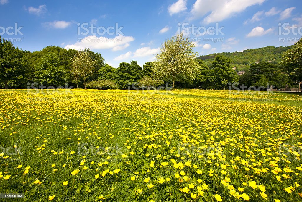 Summer meadow with wildflowers stock photo