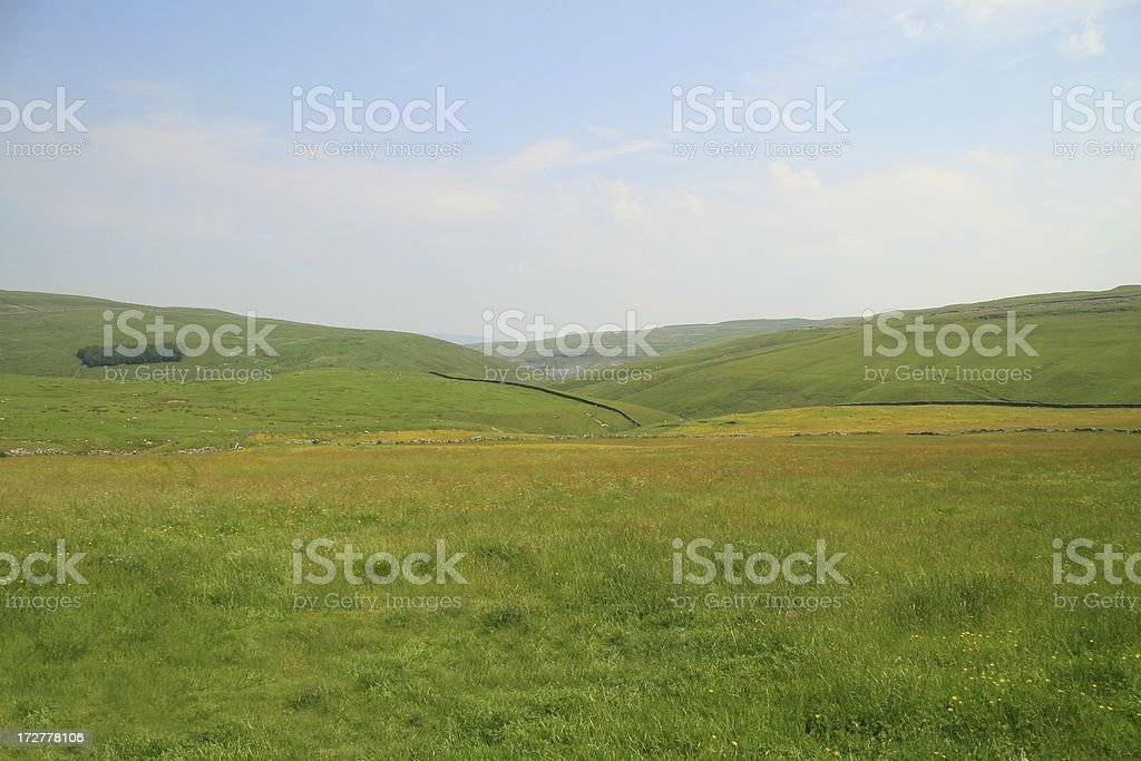 Summer meadows royalty-free stock photo