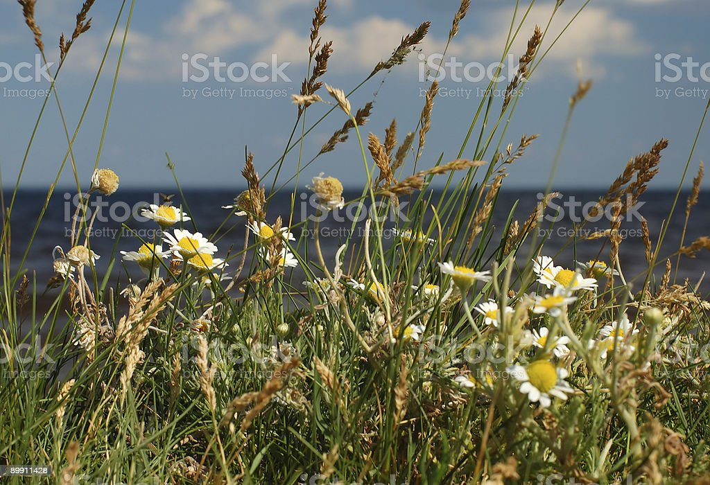 Summer midday royalty-free stock photo