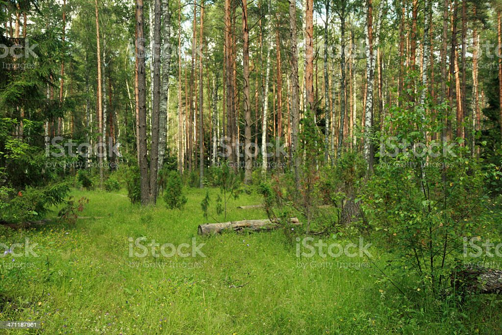 summer mixed forest royalty-free stock photo