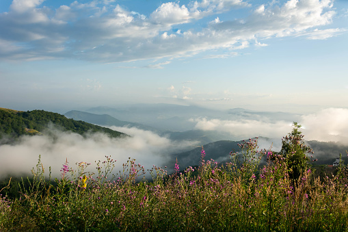 Summer morning at mountains and clouds. Background photo of low clouds in a mountain valley. National Park. Dramatic scene. Beauty world.