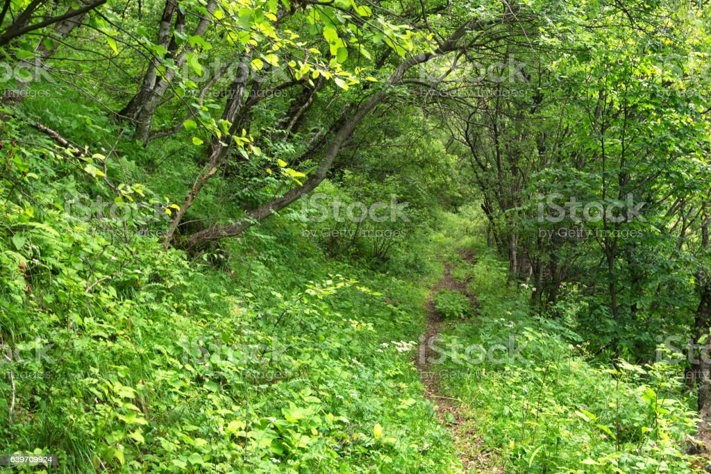 Summer morning in a green forest stock photo