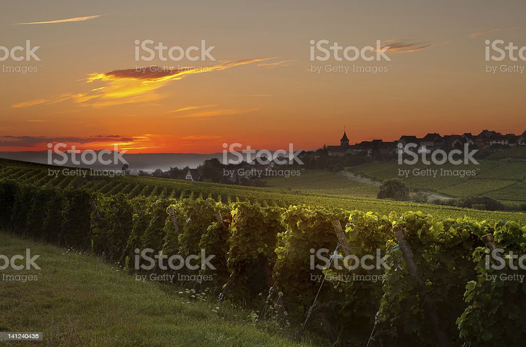 Estate mattina in francese vigneti - foto stock