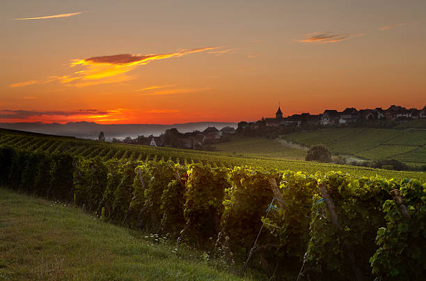 Summer morning in French vineyards stock photo