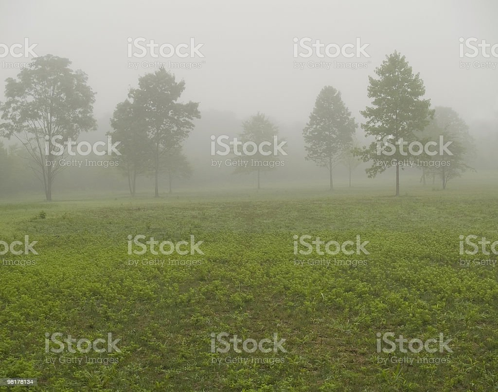 Summer Morning Mist royalty-free stock photo