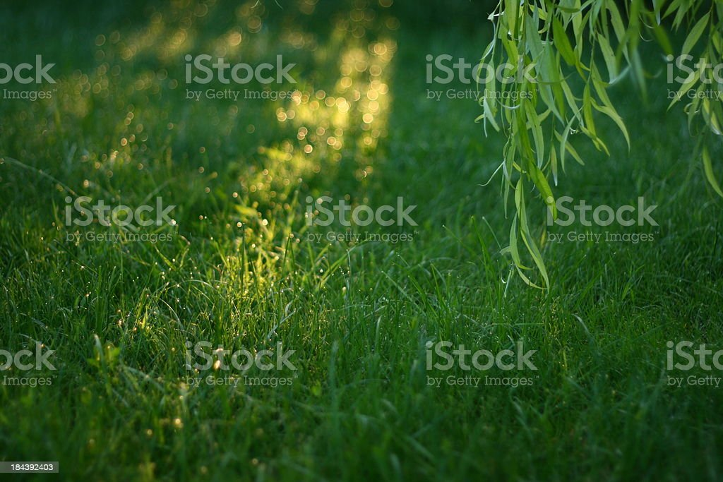 Summer morning royalty-free stock photo