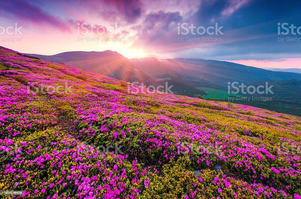 Summer morning scene of Carpathian mountains. stock photo