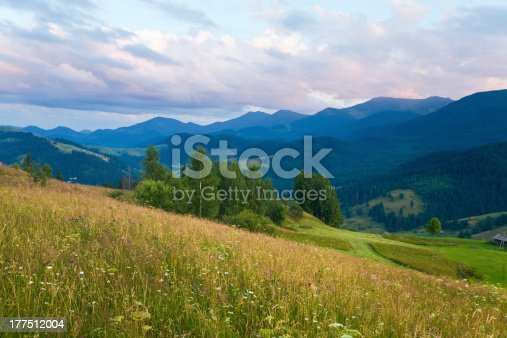Summer mountain landscape with flowering grassland in front