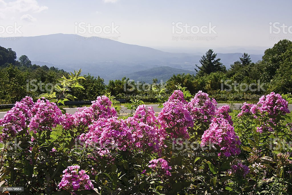 Summer Mountains and Flowers stock photo