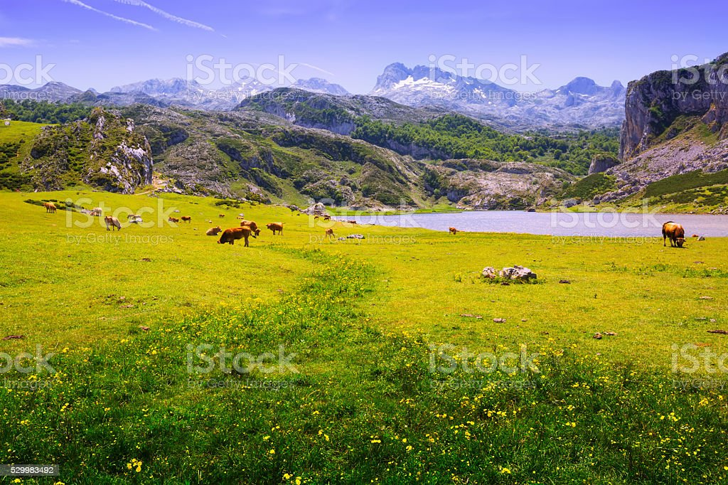 Summer mountains landscape with lake stock photo