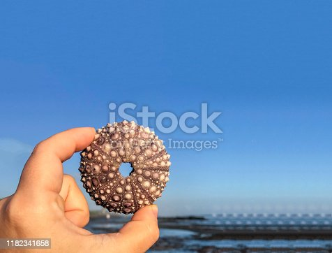 Summer nature landscape background. hand holding up an empty shell of a sea urchin at an ocean tide pool