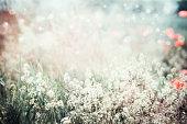 野生の花、夏自然風景の背景