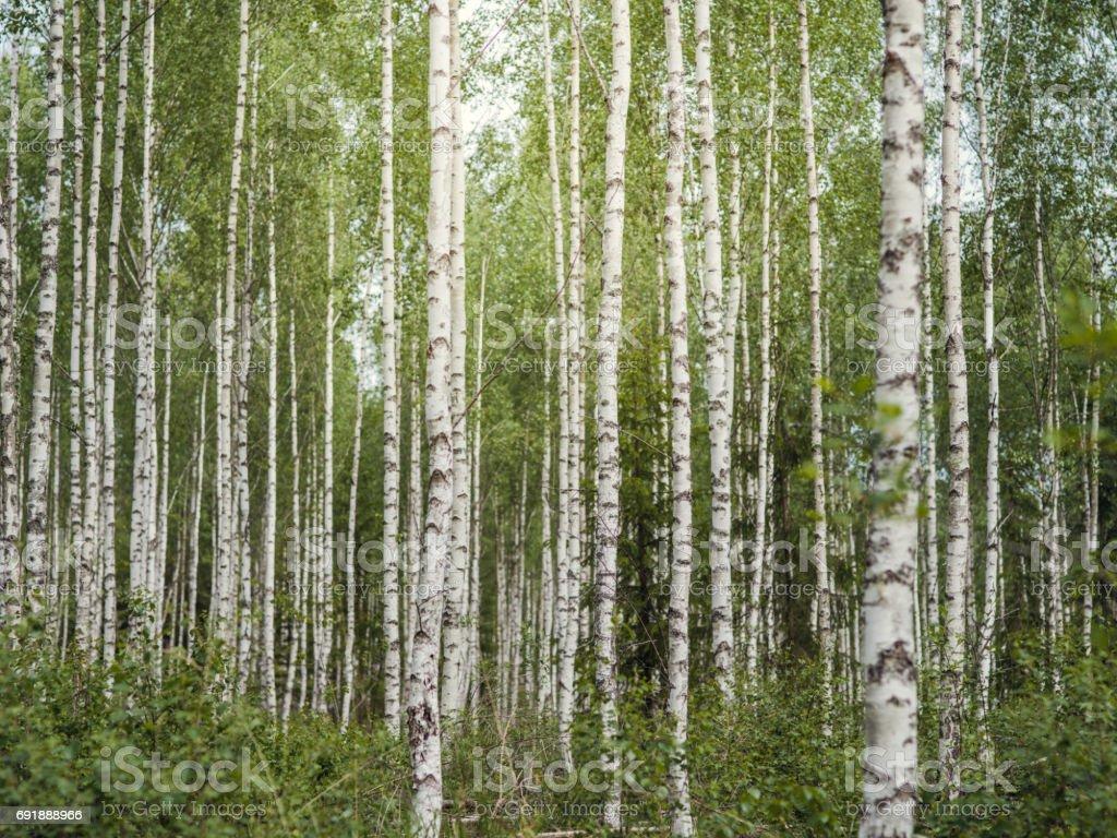 Verano paisaje de naturaleza en el bosque bosque - foto de stock