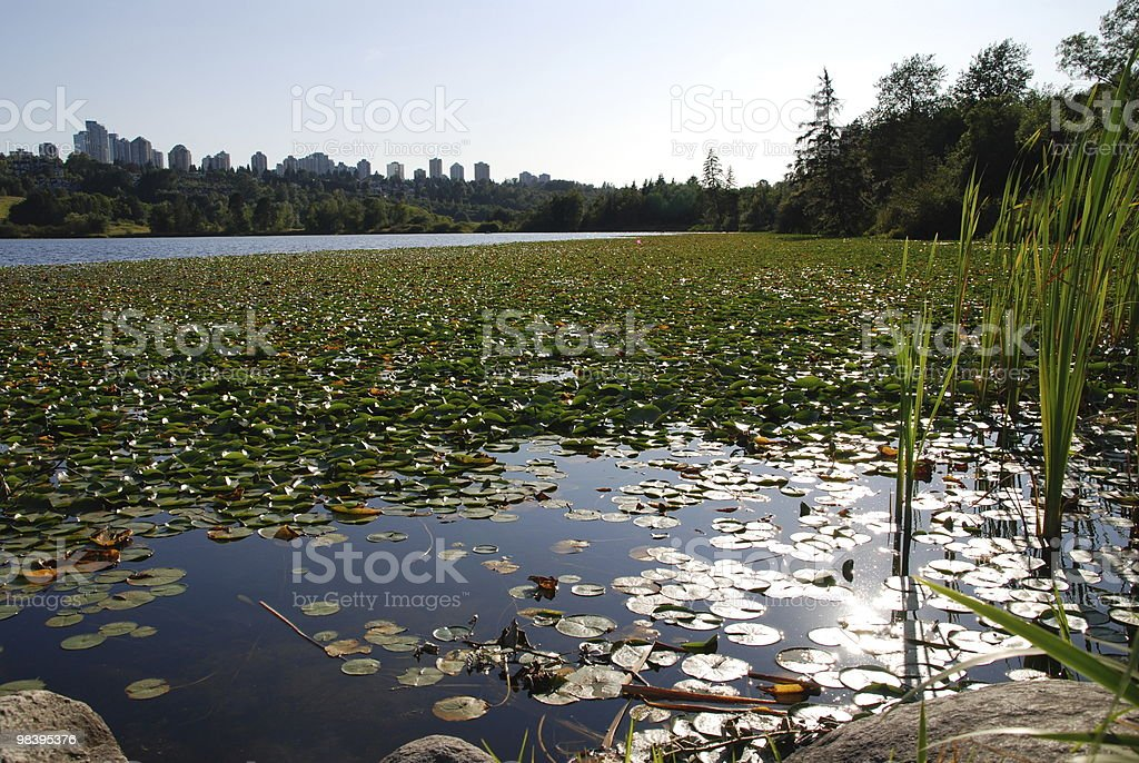Summer nature view in deer lake royalty-free stock photo