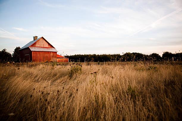 noite de verão barn - celeiros - fotografias e filmes do acervo