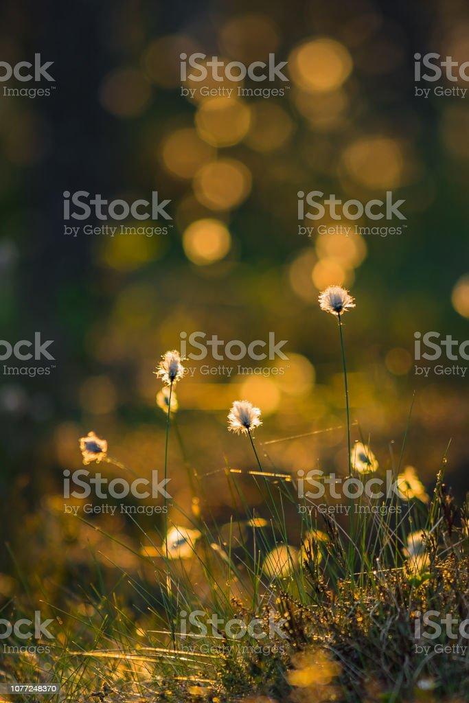 Summer night beauties stock photo