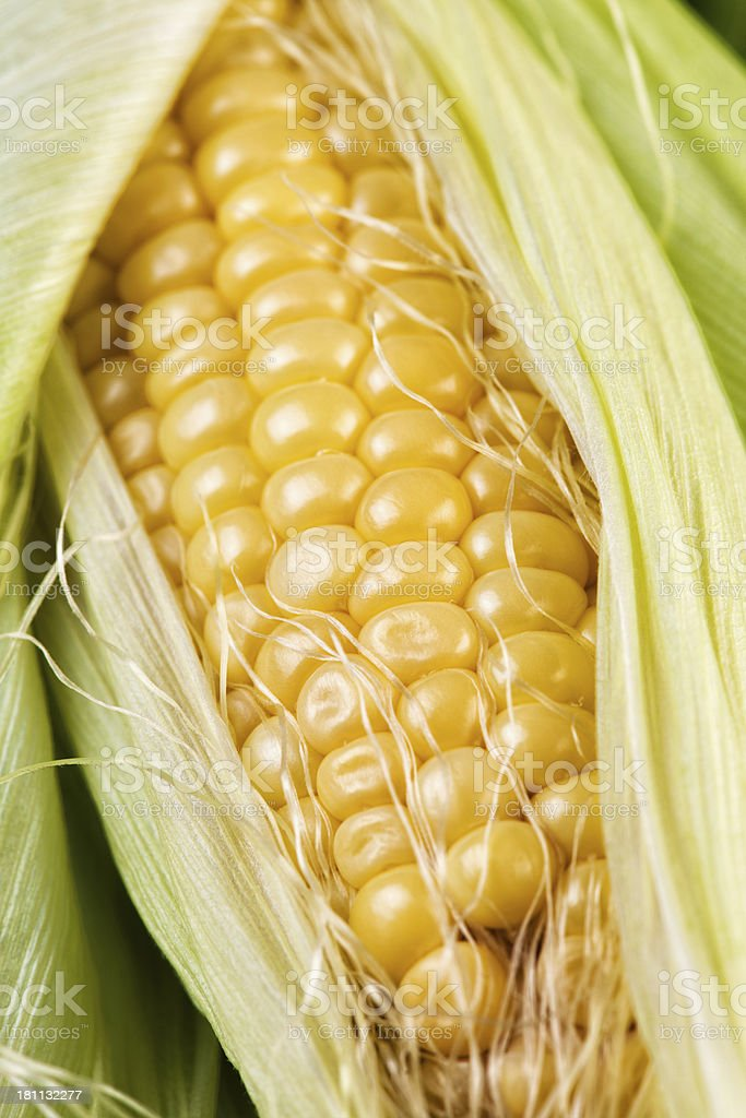 Summer of Corn royalty-free stock photo