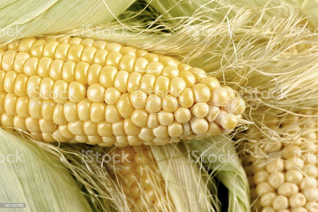 Summer of Corn royalty-free stock photo