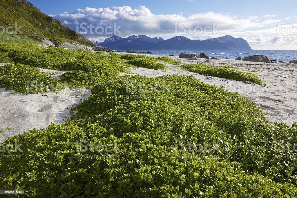 Summer on Lofoten royalty-free stock photo