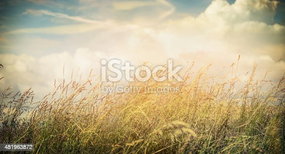 Beautiful Banner Background Hd: Summer Or Autumn Field Grass On Beautiful Sky Background