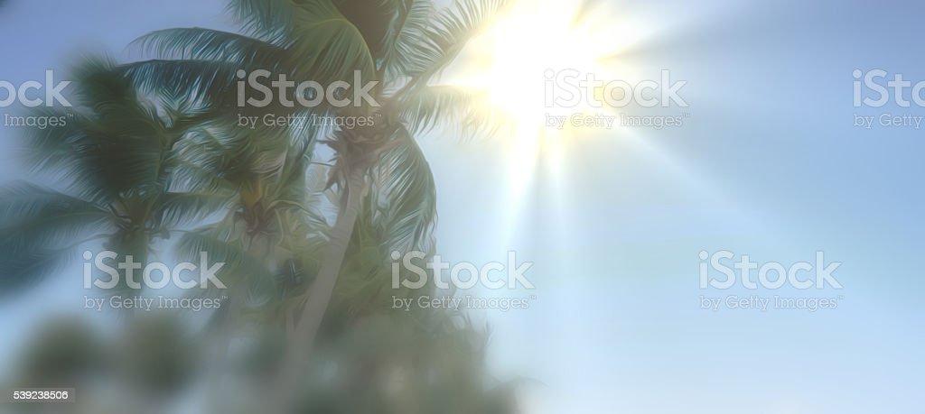 Fondo soleado de verano palmas sentimientos Galería de gráfico foto de stock libre de derechos