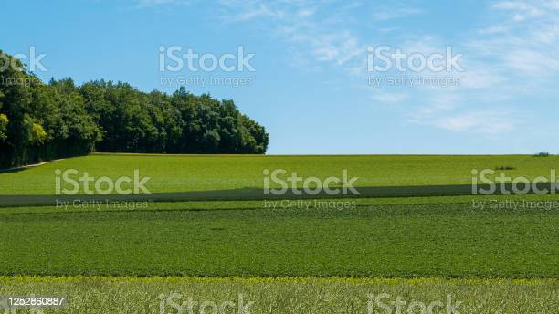 Photo of Summer panorama of green fields and meadows in a bright hilly landscape and some forest on the edge