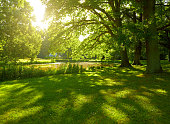 夏の公園でハンブルグ(ドイツ)