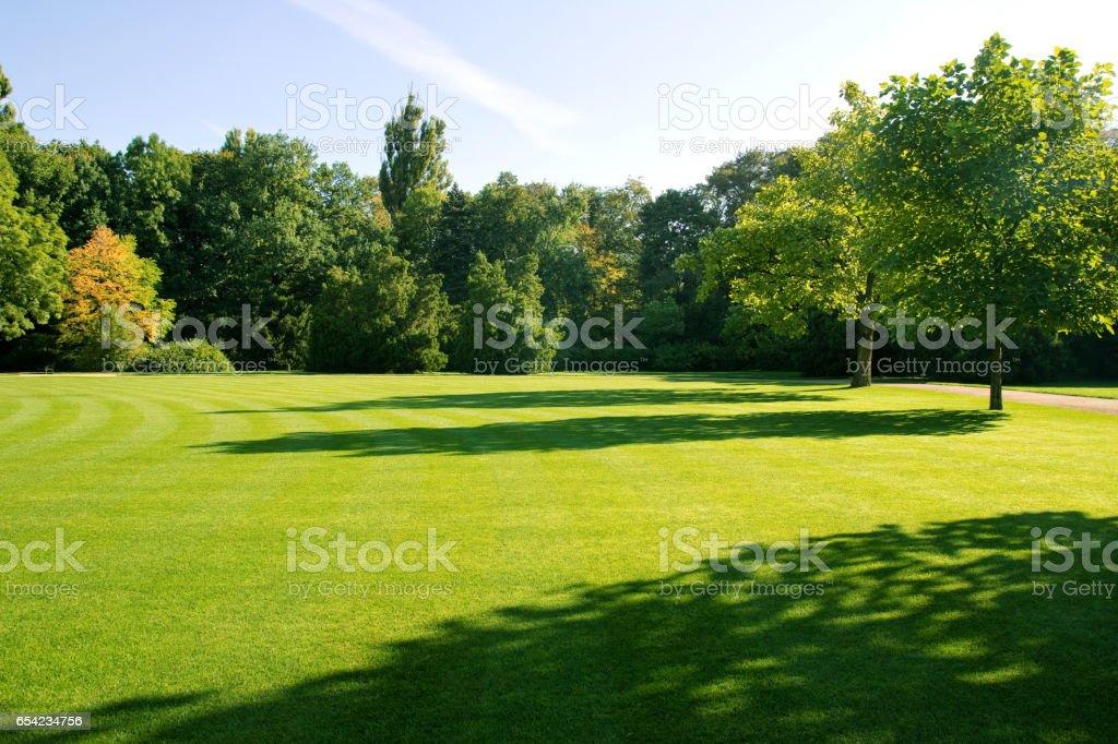 summer park landscape stock photo