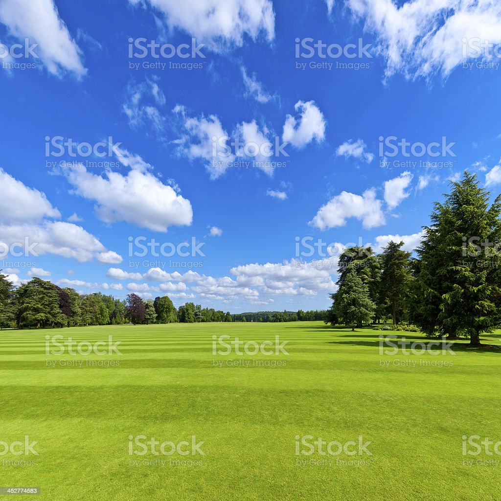 Summer park lawn stock photo