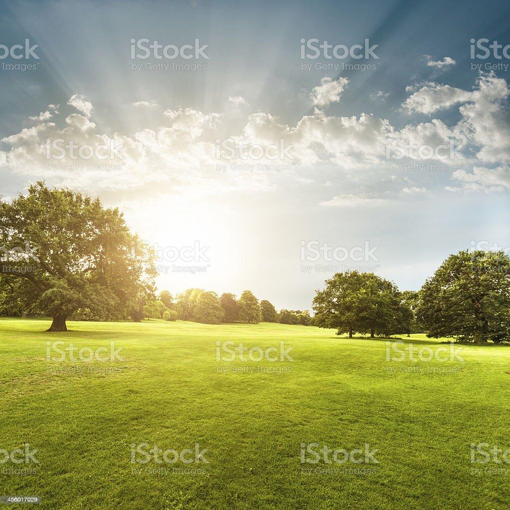 Summer park on derbyshire stock photo