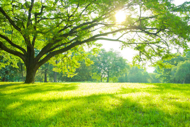 Summer Park デザイン素材 Summer Park lush foliage stock pictures, royalty-free photos & images