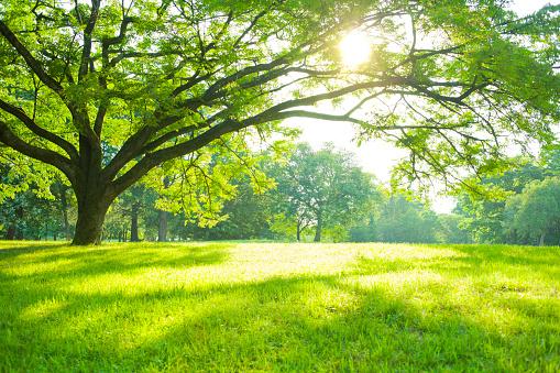 Sommerpark Stockfoto und mehr Bilder von Baum