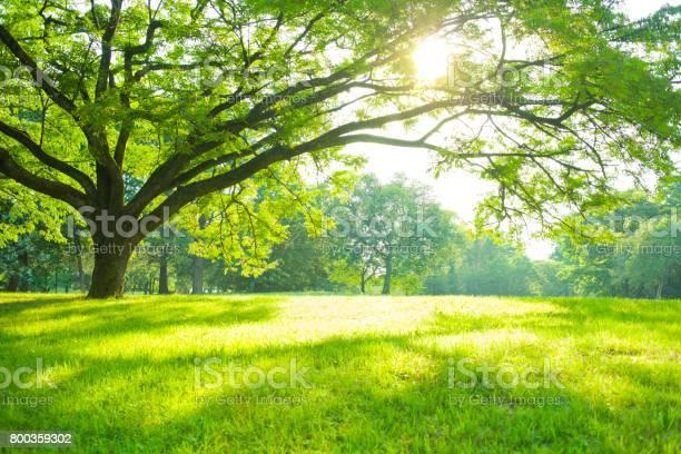 Photo of Summer Park